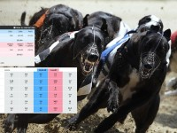 How To Trade Greyhounds On Betfair – Explanation